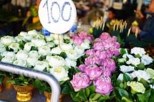 ハスの花の写真素材 [FYI03447152]
