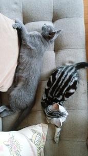 子猫とソファの写真素材 [FYI03447819]