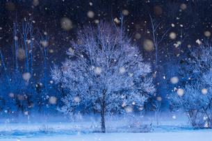 霧氷の写真素材 [FYI03447845]