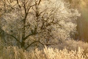 霧氷の写真素材 [FYI03447848]