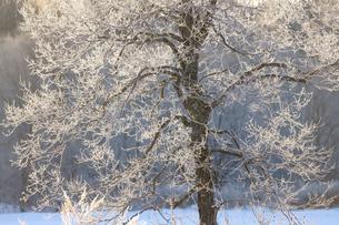 霧氷の写真素材 [FYI03447849]