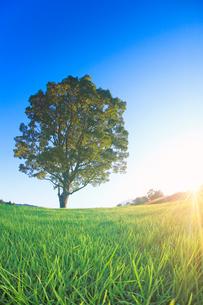 木曽馬の里のコナラの一本木と夕日の写真素材 [FYI03447991]