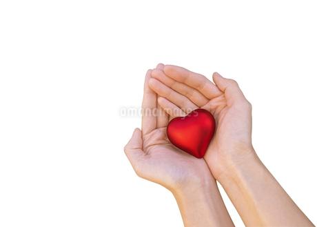優しくハートを包む女性の手の写真素材 [FYI03448142]