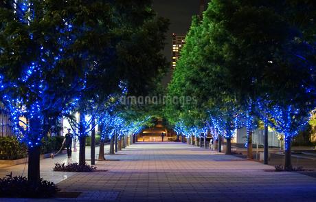 夜の公園の歩道の写真素材 [FYI03448363]