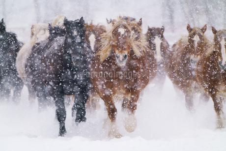 冬の馬の写真素材 [FYI03448888]