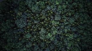 森の空撮の写真素材 [FYI03448894]