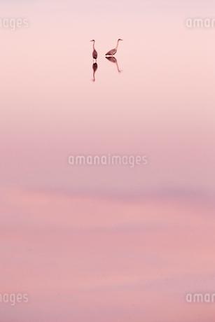 水鳥の写真素材 [FYI03448898]