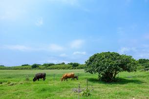 黒島の風景の写真素材 [FYI03448903]