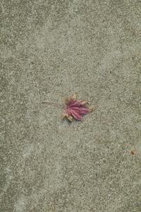 落ち葉の写真素材 [FYI03449221]