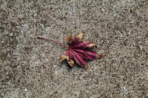 落葉の写真素材 [FYI03449222]