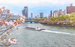大阪造幣局の「桜の通り抜け」開催時の大川の風景の写真素材 [FYI03449271]