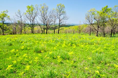 新緑の草原の写真素材 [FYI03449331]