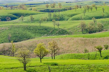 新緑の丘の写真素材 [FYI03449342]