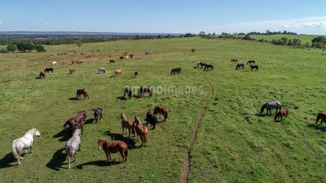 牧場の空撮の写真素材 [FYI03449385]