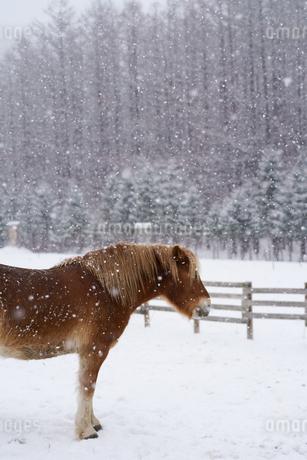 冬の牧場の写真素材 [FYI03449386]