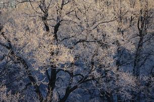 霧氷の写真素材 [FYI03449390]