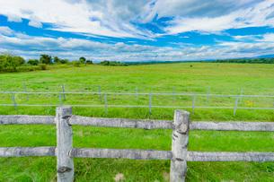 牧場の草原の写真素材 [FYI03449595]