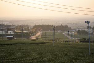 丘からも見る早朝の茶畑の写真素材 [FYI03449744]