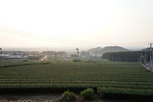 丘からも見る早朝の茶畑の写真素材 [FYI03449746]