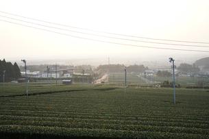 丘からも見る早朝の茶畑の写真素材 [FYI03449748]