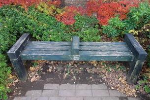 木製のベンチと落ち葉の写真素材 [FYI03449763]