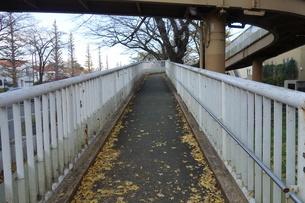 冬の大学通りの遊歩道の写真素材 [FYI03449764]