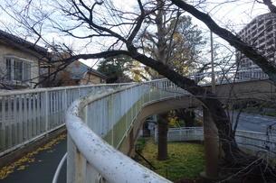 冬の大学通りの遊歩道の写真素材 [FYI03449765]