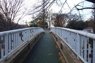 冬の大学通りの遊歩道の写真素材 [FYI03449766]