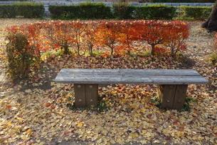 木製のベンチと降り積もった落ち葉の写真素材 [FYI03449768]