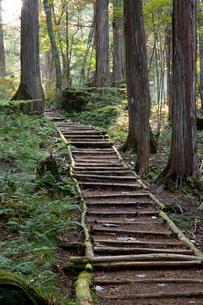 赤沢美林の檜の写真素材 [FYI03449790]