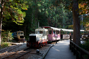 赤沢美林自然休養林を走る観光電車の写真素材 [FYI03449791]