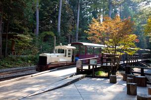 赤沢美林自然休養林を走る観光電車の写真素材 [FYI03449793]