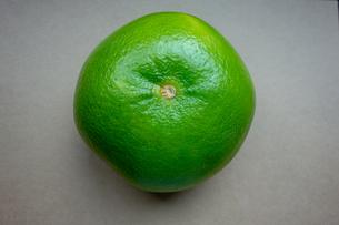 熟した緑のスウィーティーの写真素材 [FYI03449858]