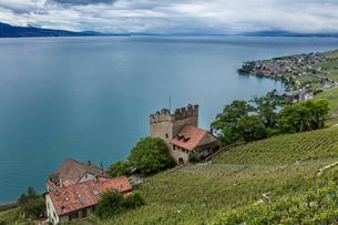 スイス、ラヴォー地区の風景とレマン湖の写真素材 [FYI03449865]