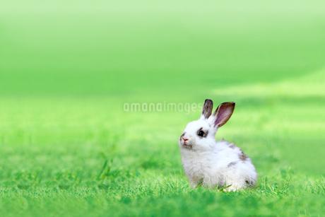 草地に座る子供のウサギの写真素材 [FYI03450733]
