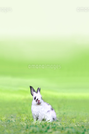 草地に座る子供のウサギの写真素材 [FYI03450749]