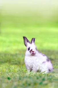 草地に座る子供のウサギの写真素材 [FYI03450751]
