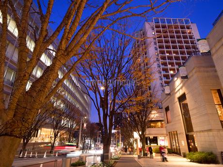 夕暮れの六本木けやき坂通りの写真素材 [FYI03450852]