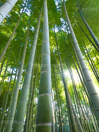 竹林の写真素材 [FYI03450940]