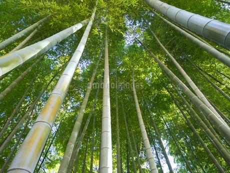 竹林の写真素材 [FYI03450941]