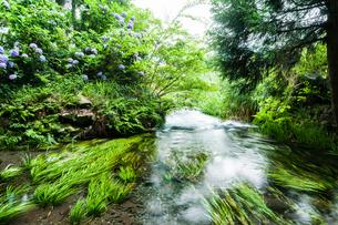水草のある清流の写真素材 [FYI03451128]