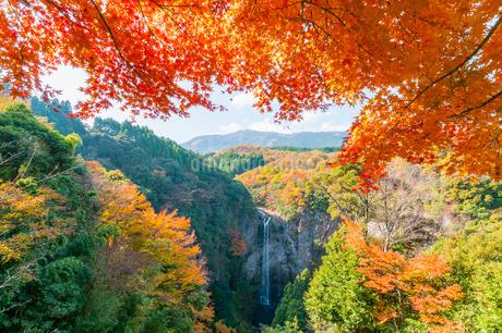 鮮やかの紅葉と滝の風景の写真素材 [FYI03451132]