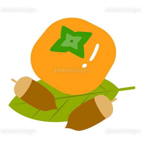 柿とドングリのイラスト素材 [FYI03451181]