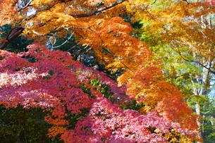 庭園の紅葉の風景の写真素材 [FYI03451411]