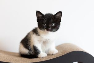 マスク顔の子猫の写真素材 [FYI03451456]