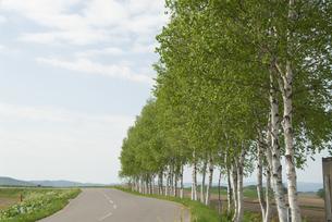 白樺の道の写真素材 [FYI03451573]