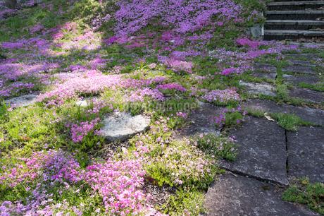 花畑の写真素材 [FYI03451582]