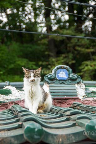 屋根の上の猫の写真素材 [FYI03451586]