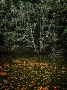 風景の写真素材 [FYI03451711]
