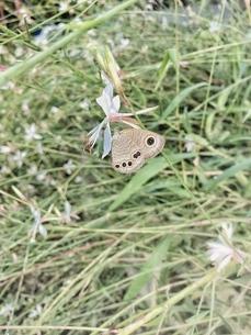 蝶の写真素材 [FYI03451733]